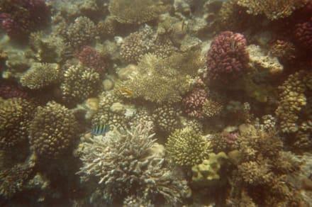 Unterwasseraufnahme - Schnorcheln Hausriff Bel Air Beach /Arabia Hurghada