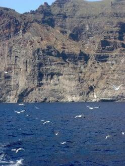 Felsen - Los Gigantes und Möwen - Steilküste Los Gigantes