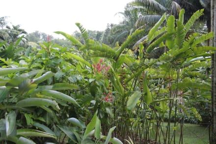 botanischer garten singapur in singapur holidaycheck. Black Bedroom Furniture Sets. Home Design Ideas