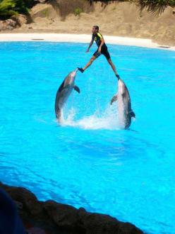 Delfinshow - Loro Parque