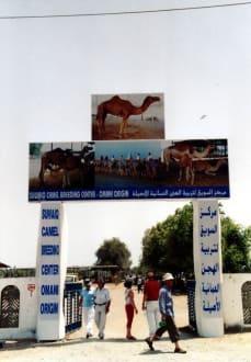 Eingangstor - Suwaiq Camel Breeding Center