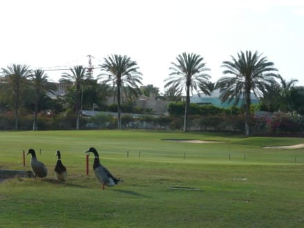 Sports (other)  - Golf Las Americas