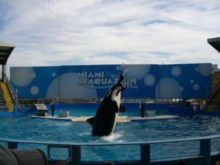 Miami Sea Aquarium - Seaquarium