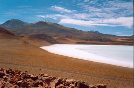 Salar Salinas Blancas - Atacama und Nord-Chile