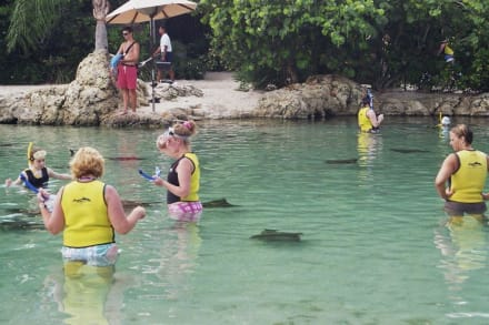 Rochenbecken in Discovery Cove Park - Wasserpark Discovery Cove