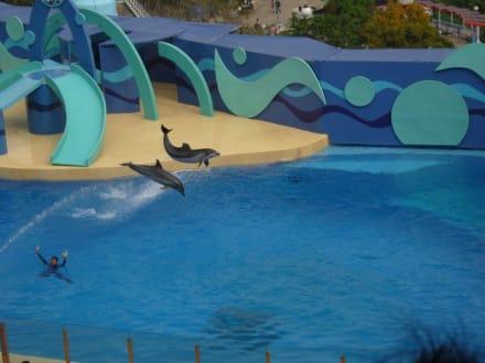 Freizeitpark - Ocean Park