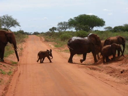 Wenn ich groß bin, werd ich Elefant - Tsavo Ost Nationalpark