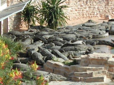 Krokodile - Krokodilfarm Animalia