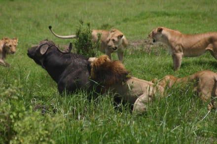 Safari - Masai Mara Safari