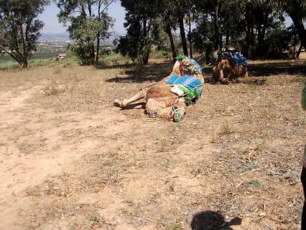 Kamel ist müde! - Kamelreiten Nabeul