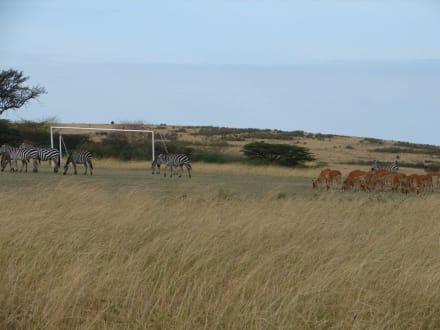 Freundschaftsspiel - Masai Mara Safari