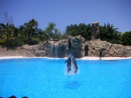 Delfine im Park - Loro Parque
