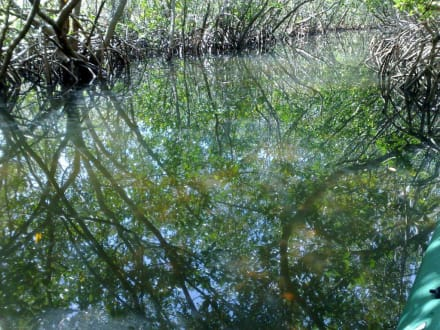 Im Mangrovenkanal - Kanu- und Kajakverleih Grande Tours Port Charlotte