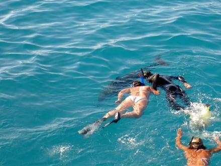 Schnorcheln mit Delfinen - Schnorcheln Hurghada