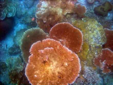 Korallen - Schnorcheln Perhentian
