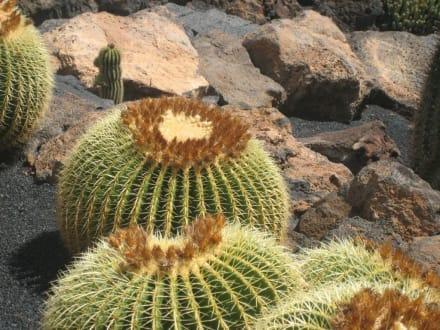 Detail - Jardin de Cactus / Kaktusgarten Guatiza