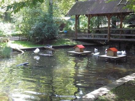 Der Teich mit Brücke - Schongauer Märchenwald und Tierpark