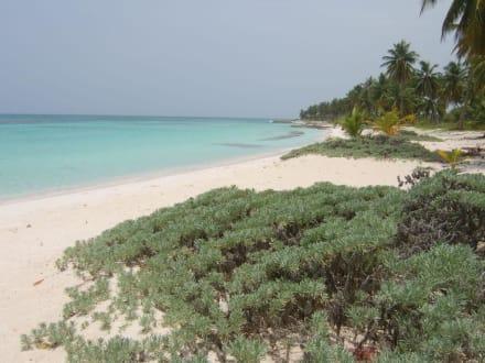 Privatstrand auf Saona - Isla Saona