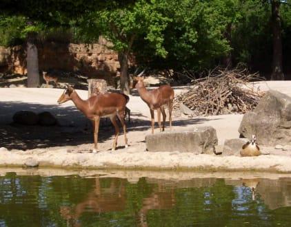 Bootsfahrt Sambesi - Erlebnis-Zoo Hannover