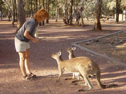 Campingplatz - Flinderskette / Flinders Ranges