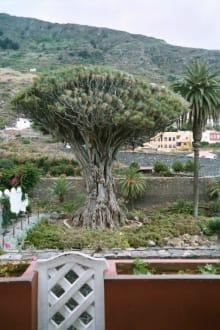 Der Drachenbaum - Parque del Drago