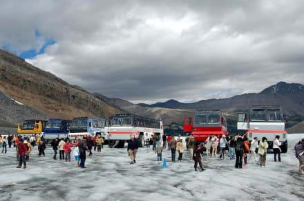 Snow Coaches - Athabasca Glacier