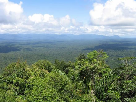 Regenwald - Unterwegs in Venezuela