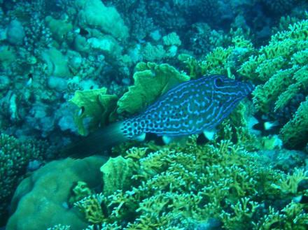 Unterwasserwelt 3 - Tauchen Marsa Alam