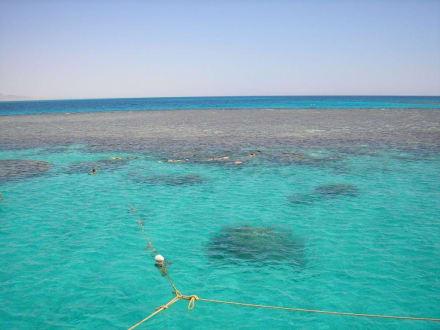 Korallenriff vor El Gouna - Schnorcheln Hurghada