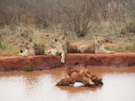 Mittagsruhe - Tsavo Ost und West Safari