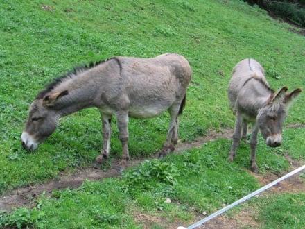 Esel - Märchenwandermeile Trebesind