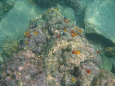 Korallen - Schnorcheltrip mit Speedboot