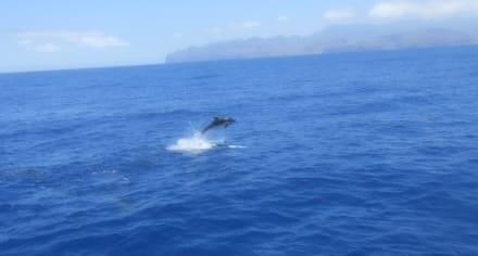 Dolphin watching - Delfin Tour Puerto Rico