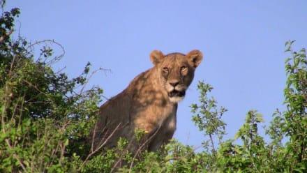 Naturreservat/Zoo - Ngorongoro Reservat