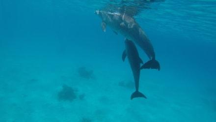 Delfine hautnah - Ausflug mit Mohamed