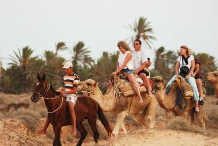 Kamelreiten - Kamelreiten Midoun
