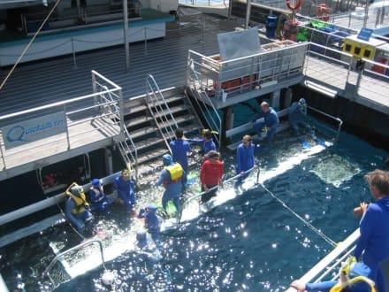 Quicksilver - Quicksilver Cruise Outer Reef