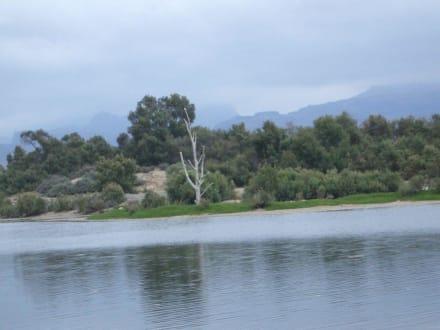 Oasis Maspalomas - Naturschutzgebiet La Charca