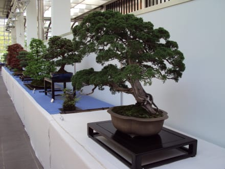 "Bonsai Frankfurt bonsai"" bild palmengarten frankfurt am main in frankfurt am main"