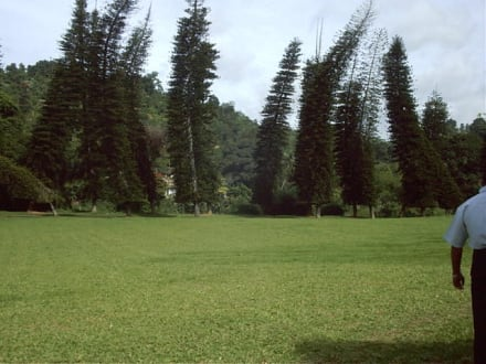 Botanischer Garten - Botanischer Garten Peradeniya