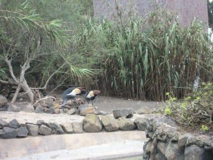 Tropical Park - Tropical Park