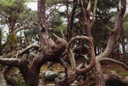 Geformt von den Naturgewalten - Trollwald - Trollskogen