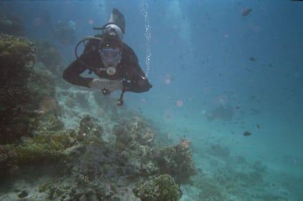 Der Traum jedes Tauchers - Tauchen Hurghada