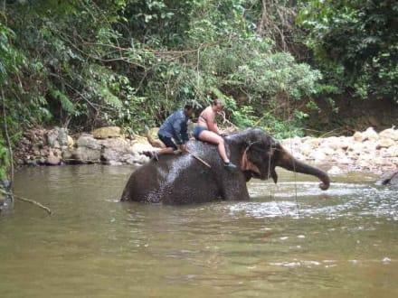 Bad mit Elefanten - Elefantentrecking