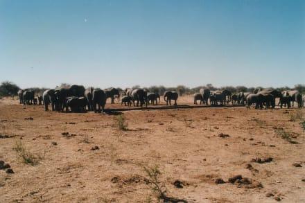 Elefantenherde - Etosha Nationalpark