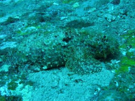 Gut getarnt - Similan Islands
