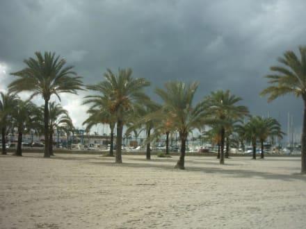 Palmen und Hafen von El Arenal - Strand El Arenal/S'Arenal