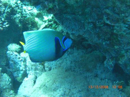 Fisch am Hausriff - Schnorcheln Hurghada