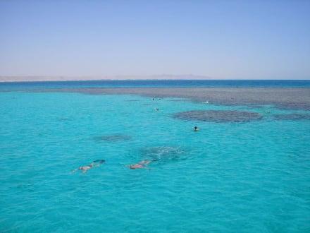 Schnorchelgruppe vor Korallenriff - Giftun / Mahmya Inseln