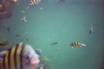Fische auf Mosquito Island - Mosquito Island